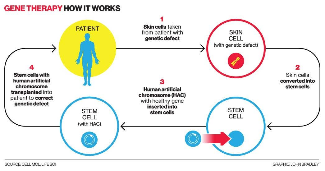 genetic engineering offers cures for many inherited diseases The potential to revolutionise treatment for all kinds of genetic diseases inherited eye disease genetic engineering gene therapy offers a range of.
