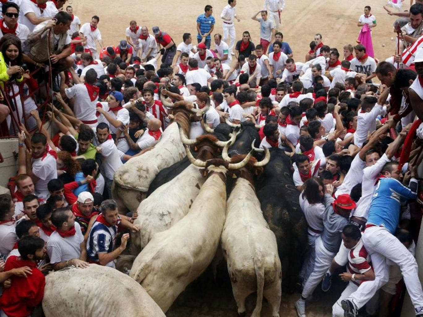 Runners get trapped with Fuente Ymbro fighting bulls at the entrance to the bull ring