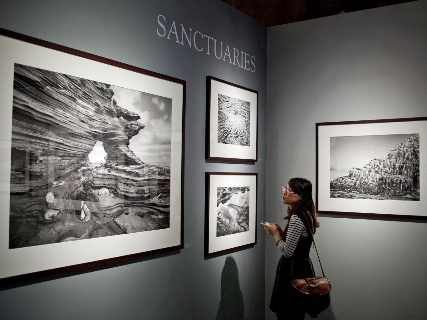 A woman looks at work by Sebastião Salgado at the Natural History Museum