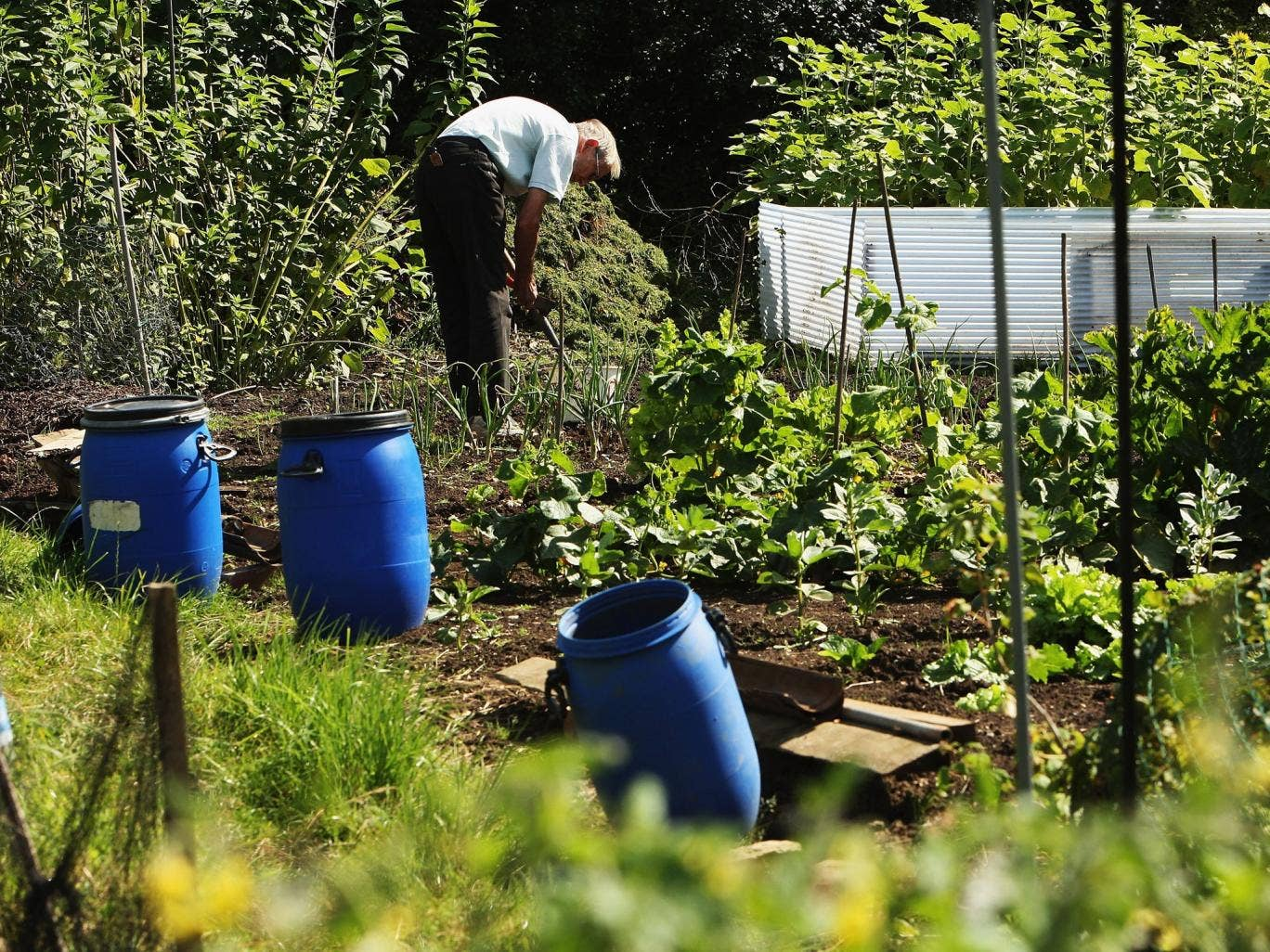 More allotments are being sold off by councils