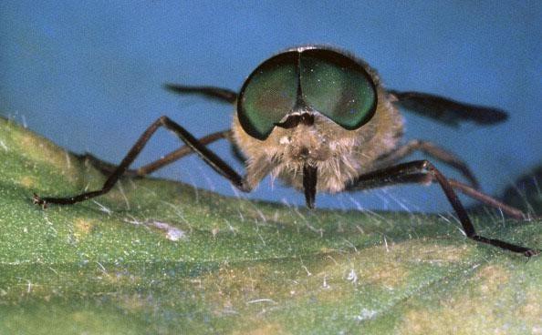 A horsefly bite killed Andy Batty through an 'incredibly rare' allergic reaction