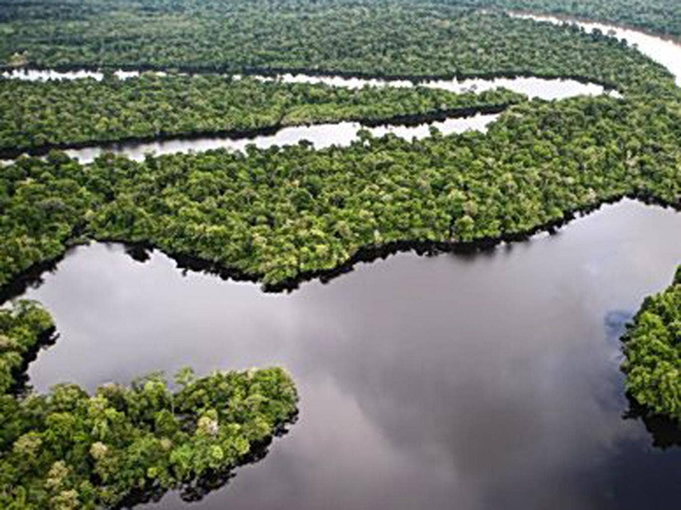 The Amazon's eco-systems have been damaged
