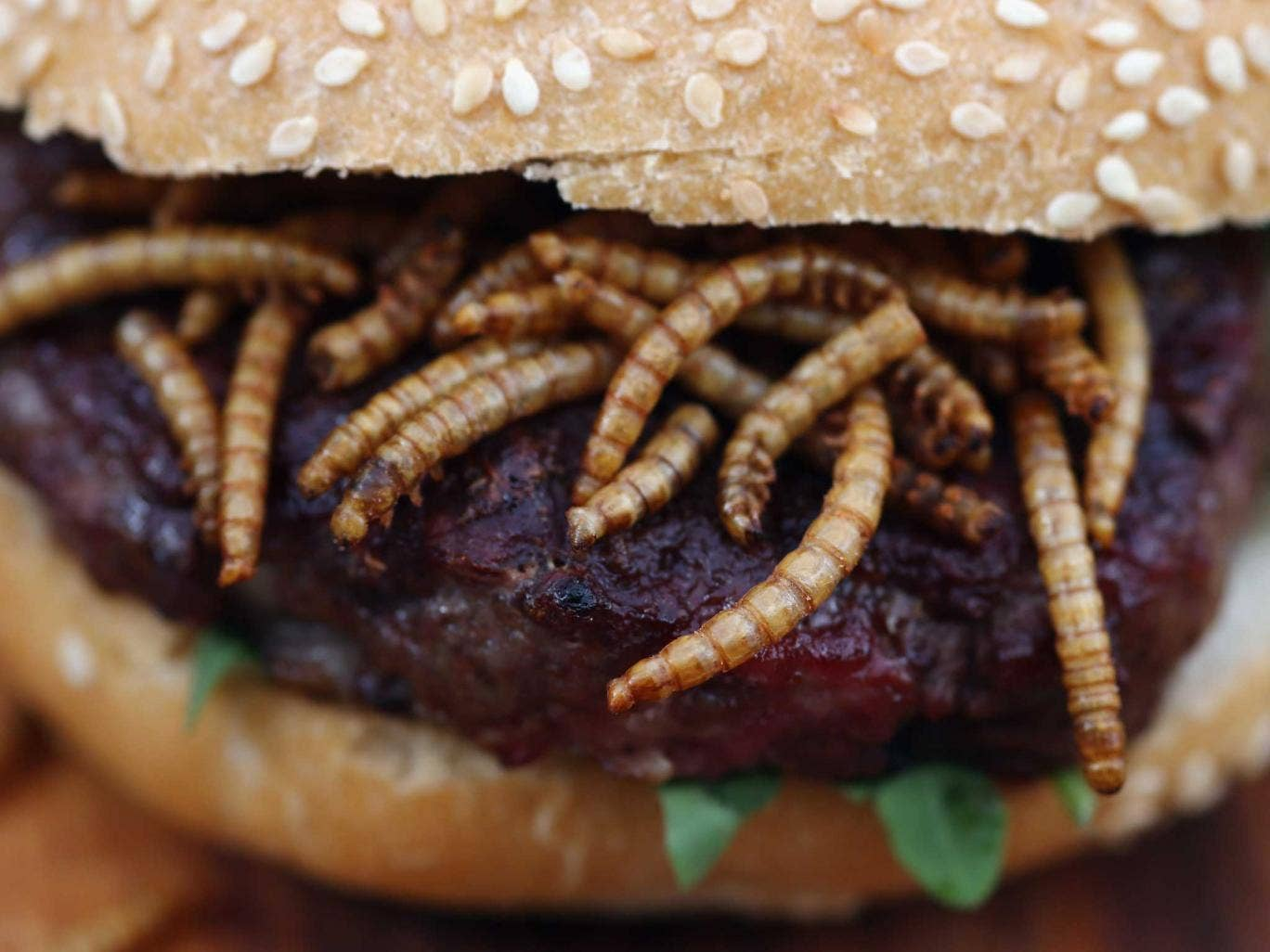 A pigeon burger with mealworms at the 'pop up' stand at One New Change