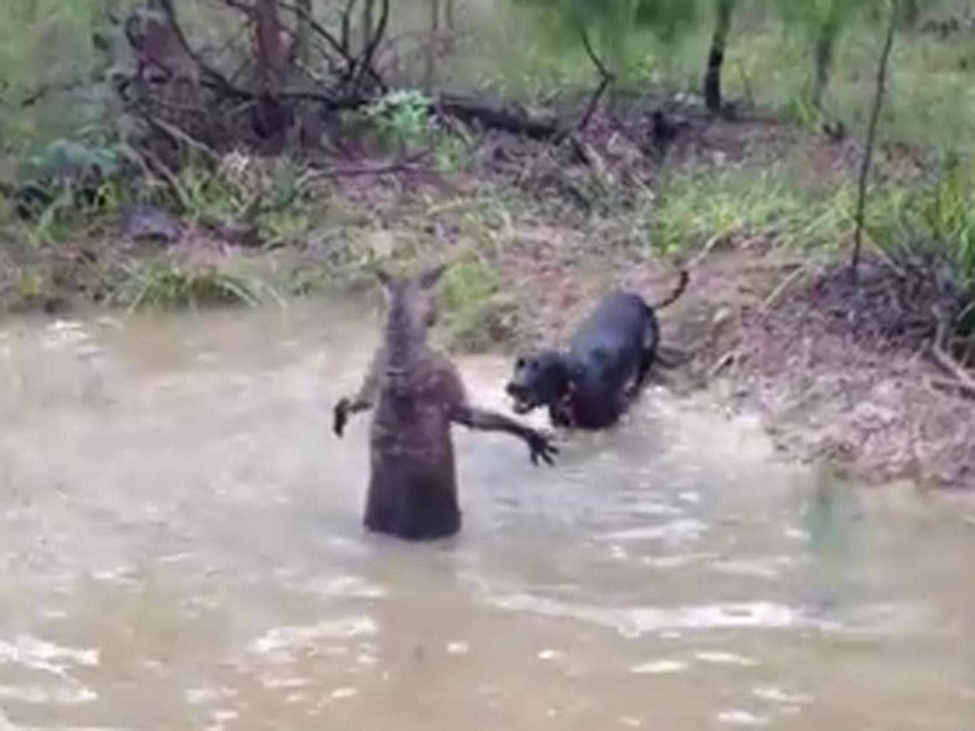 """A video with the ominous title """"Kangaroo Tries to Drown Dog"""" has sparked controversy in Australia"""