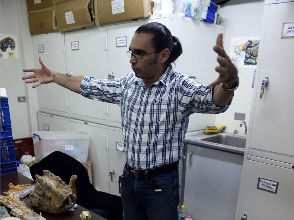 Venezuelan palaeontologist Ascania Rincon shows the skull of a glyptodont