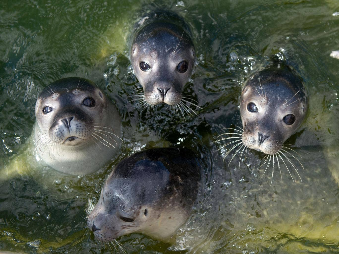 Seals will be recruited to take part in an attempt to study the Pine Island Glacier
