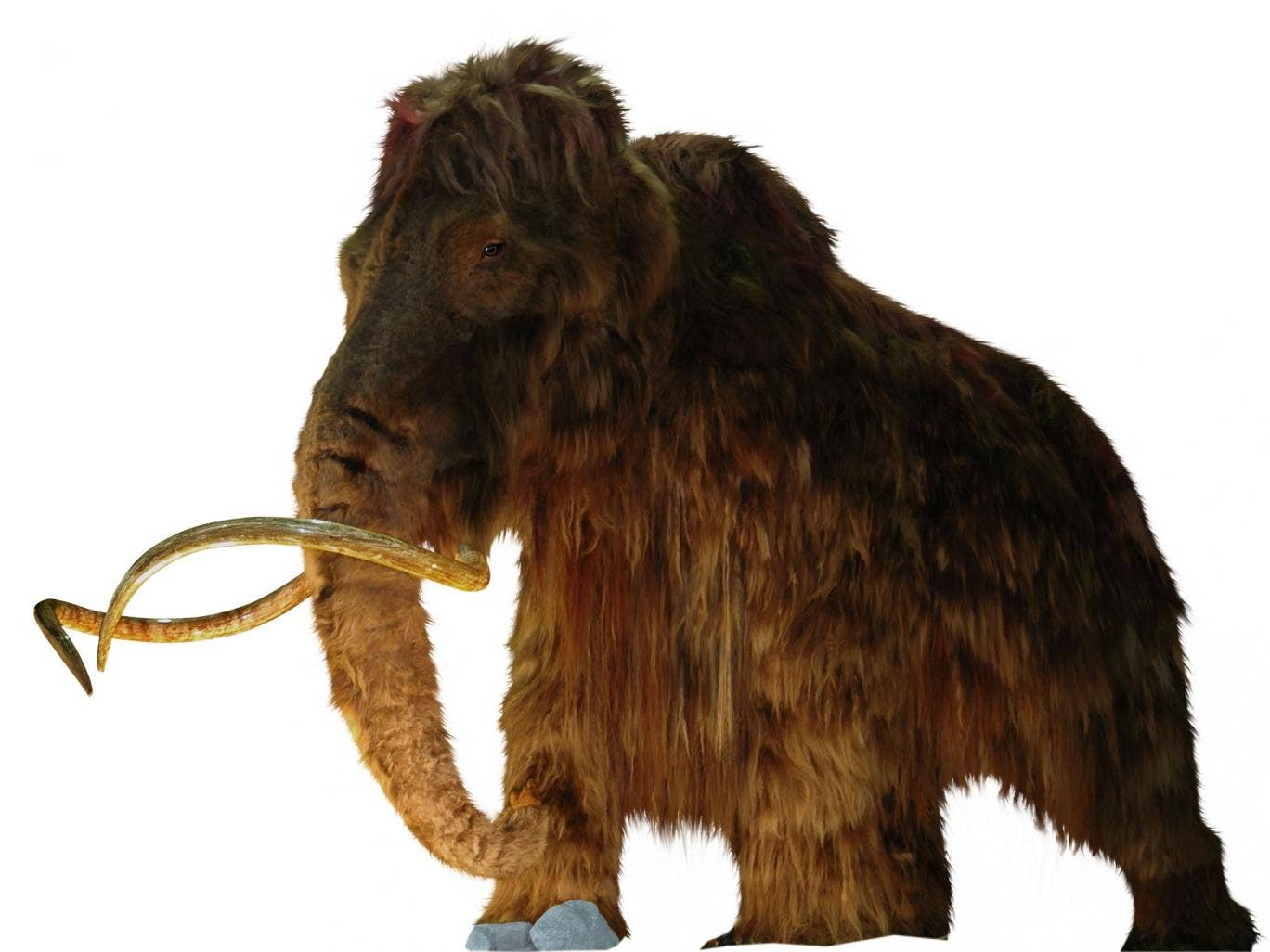 the extinct animals research woolly mammoth Researchers want to clone 40,000-year-old extinct horse — a step towards woolly mammoth resurrection  were able to recover muscle tissues from the animal  wooly mammoths were killed.