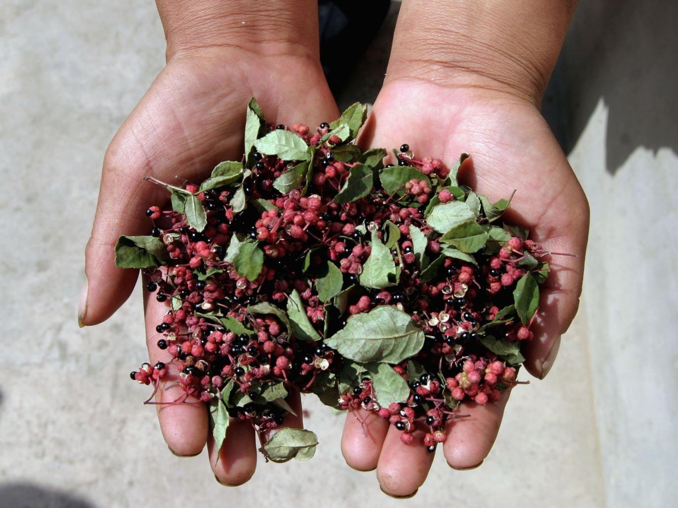 Szechuan peppercorns cause a unique sensation