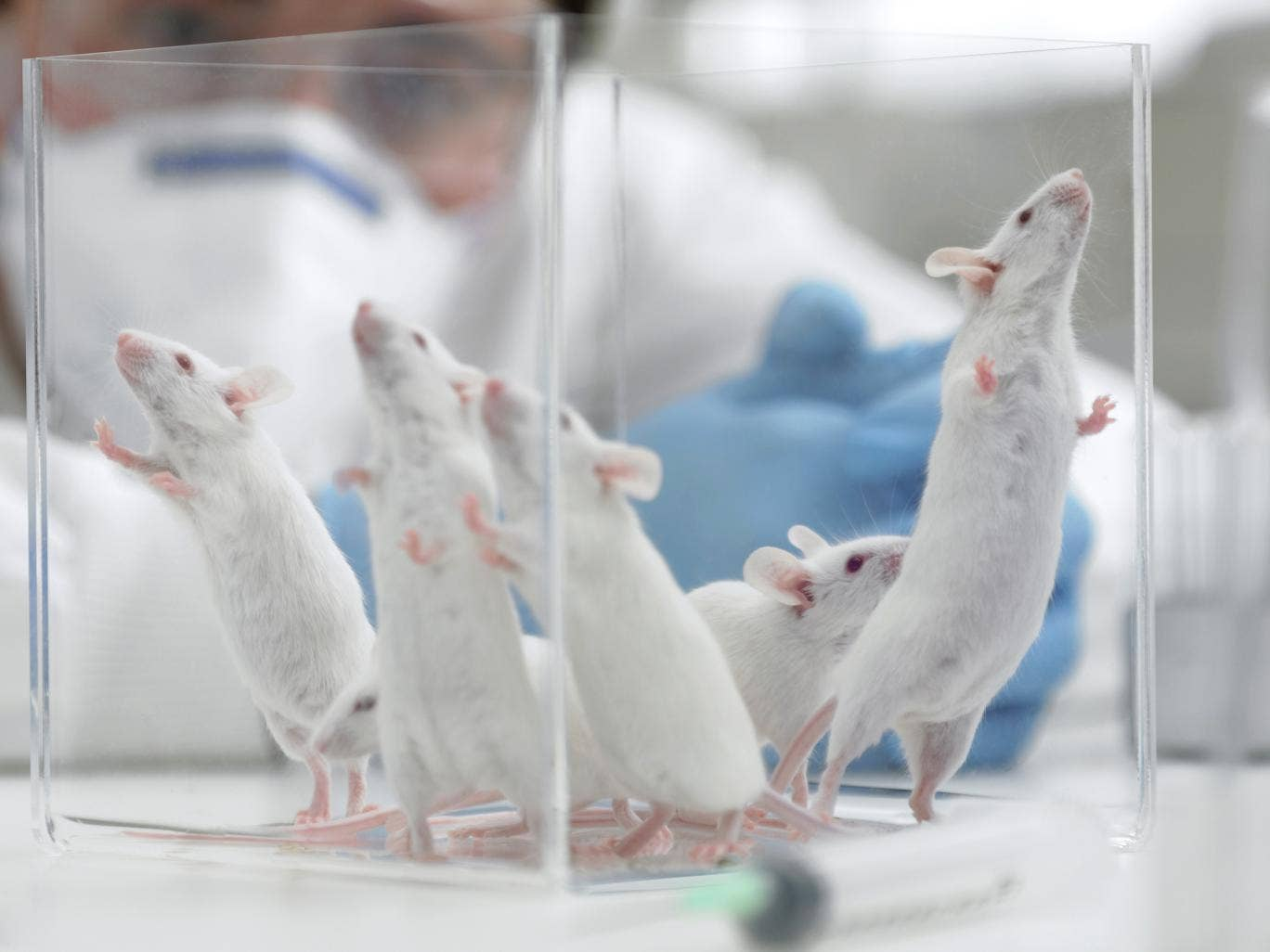 Researchers were able to perform gene therapy on living mice