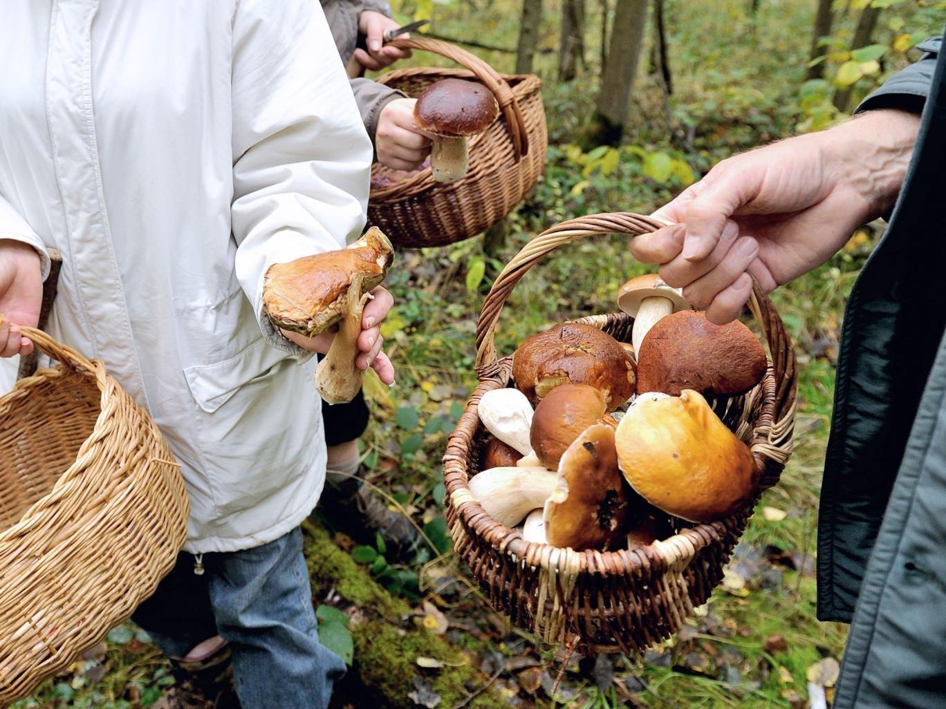Harvest time: food festivals include mushroom hunts