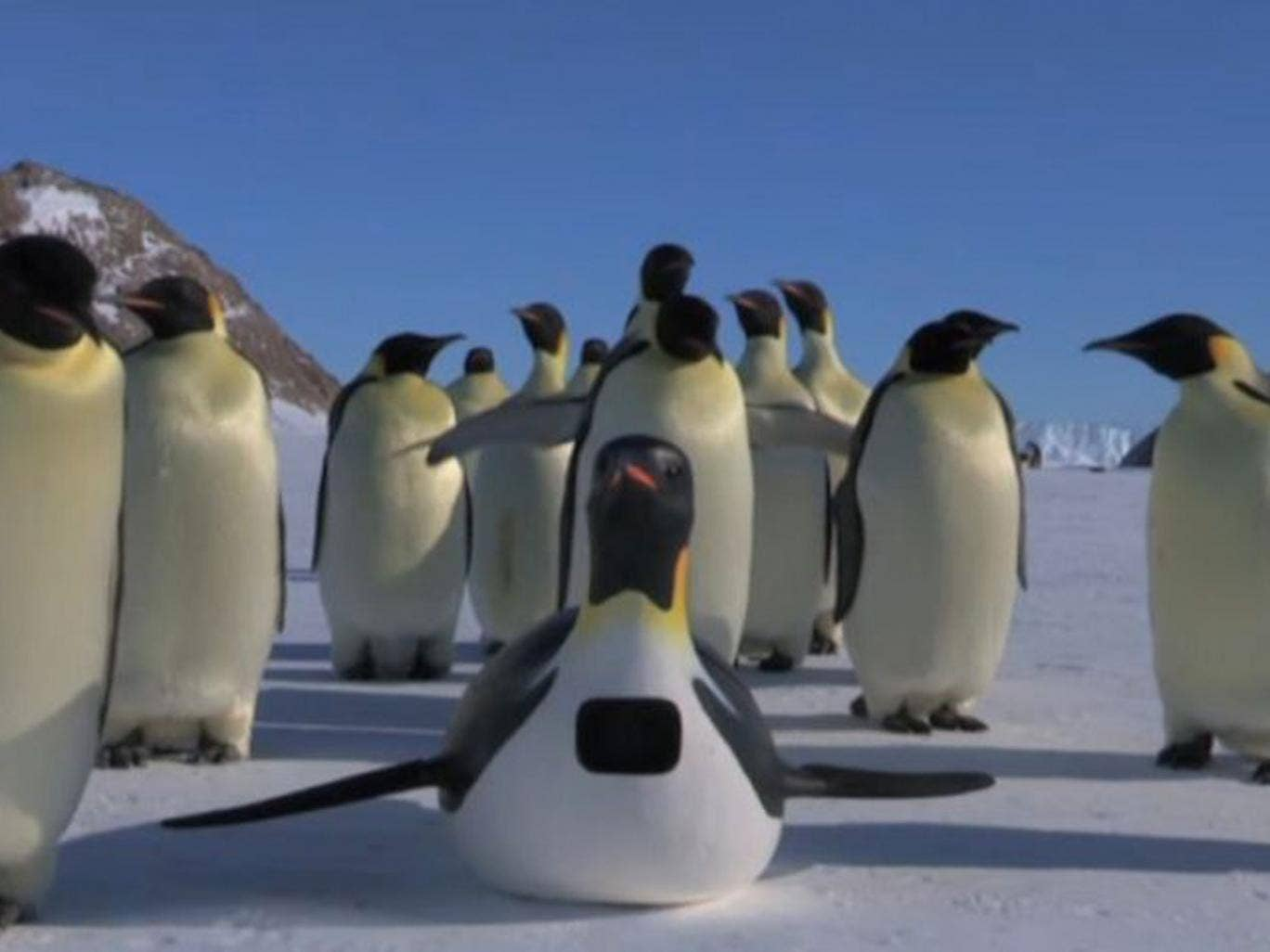 """Penguincam"" was manoeuvred among a group of Antarctic Emperor Penguins for the filming of the BBC's Spy in the Huddle"
