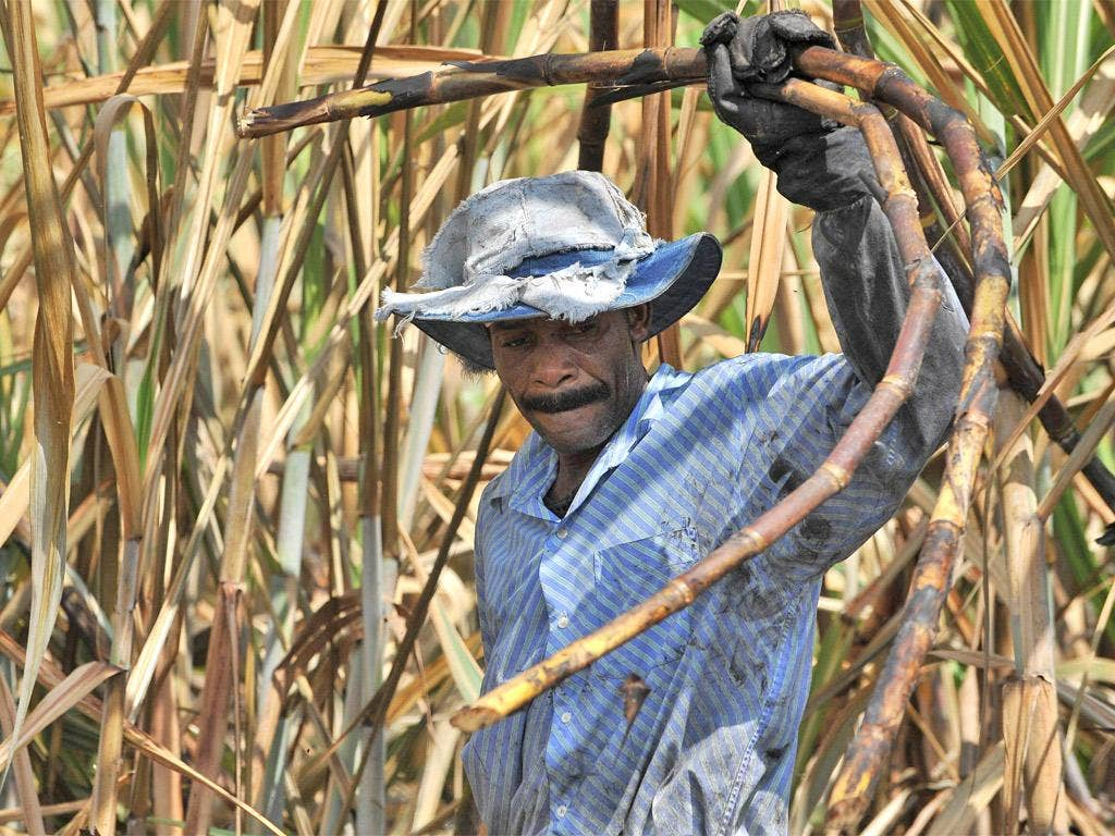 The developed world's growing sweet tooth has increased global land deals to make way for lucrative sugar crops