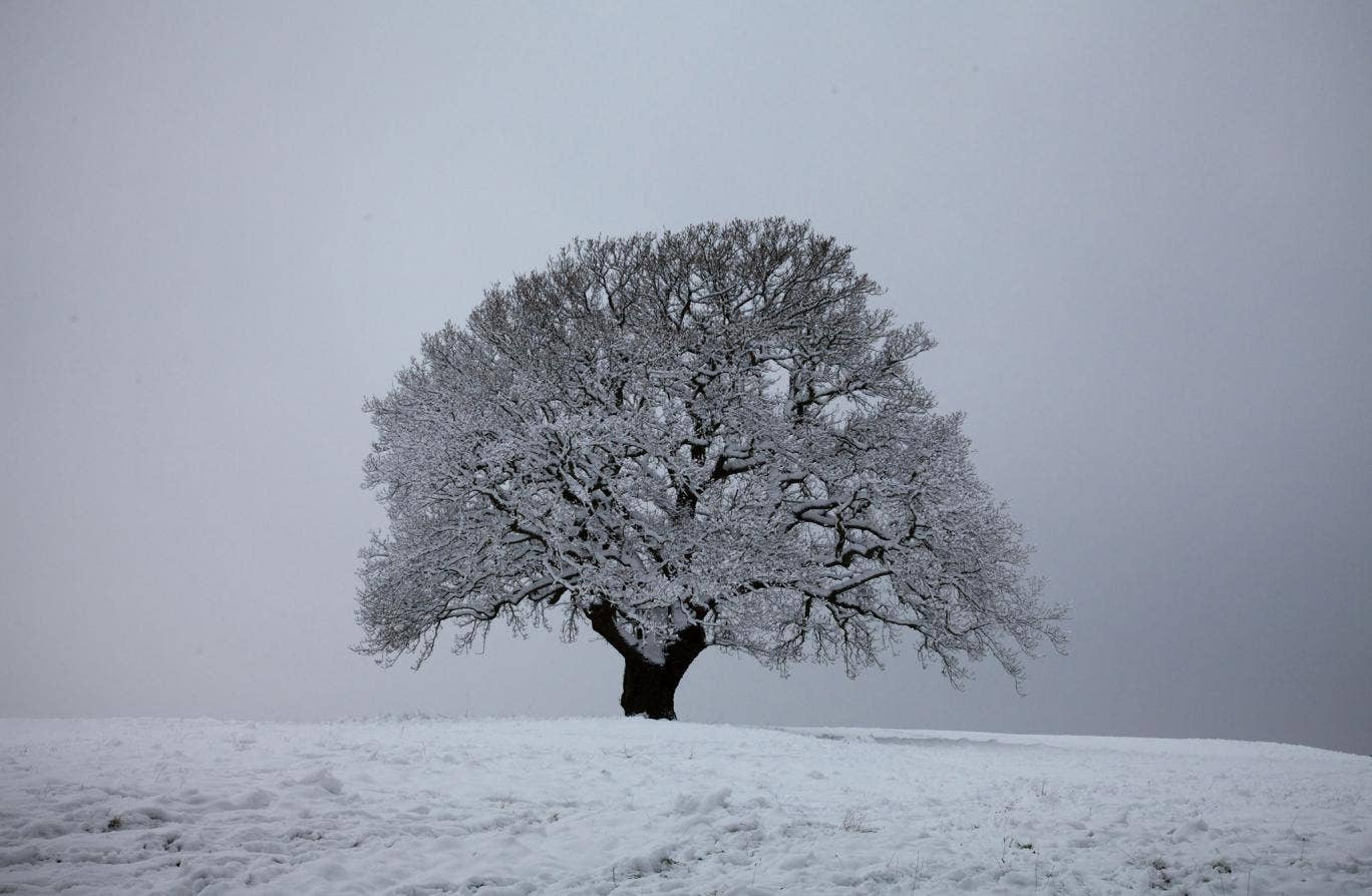 The Great British Year featured a 700-year-old Dorset oak that 'survived its first frost in the days when medieval knights roamed the land'