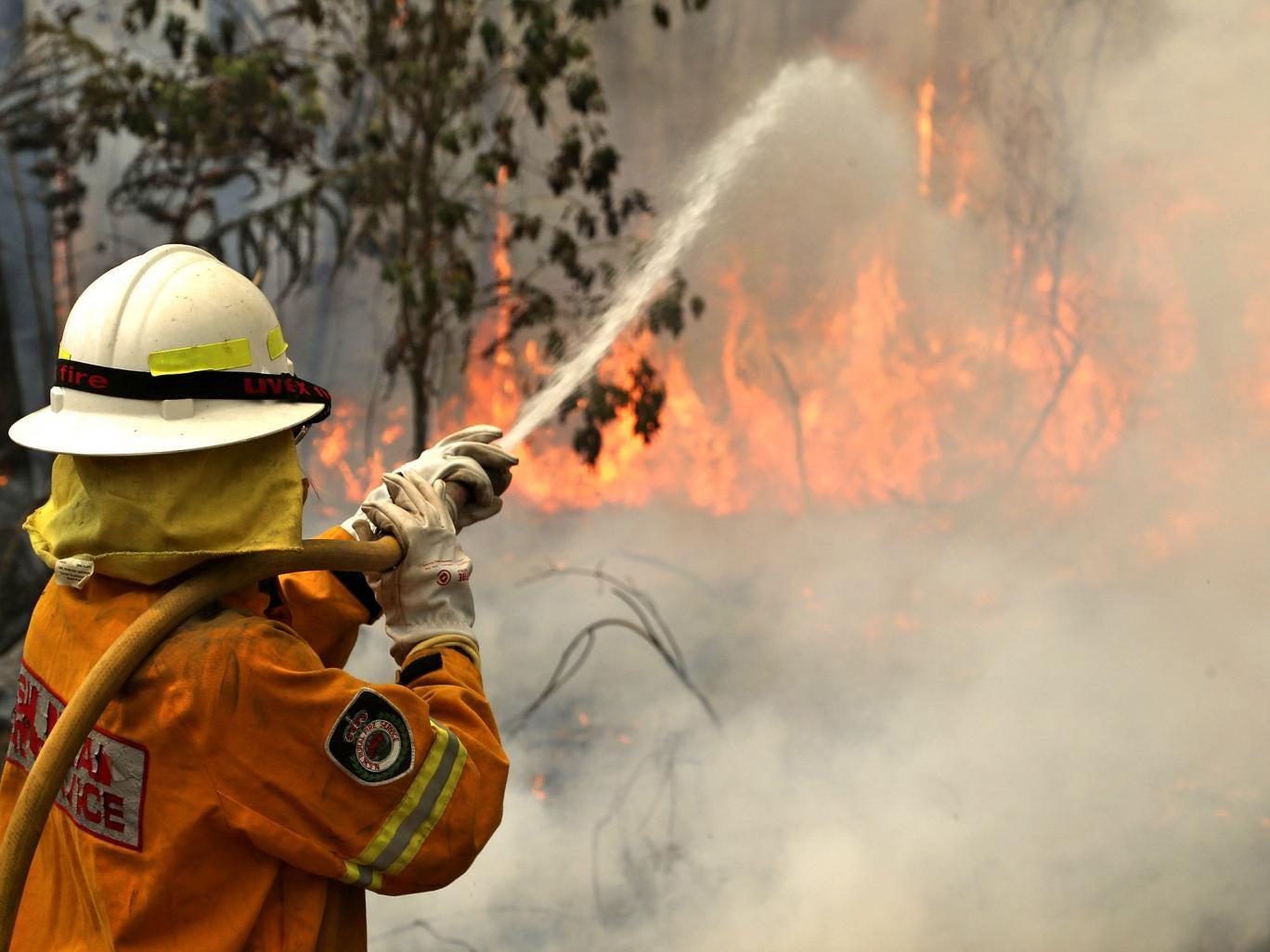 Fireman battles the flames at Bilpin, west of Sydney