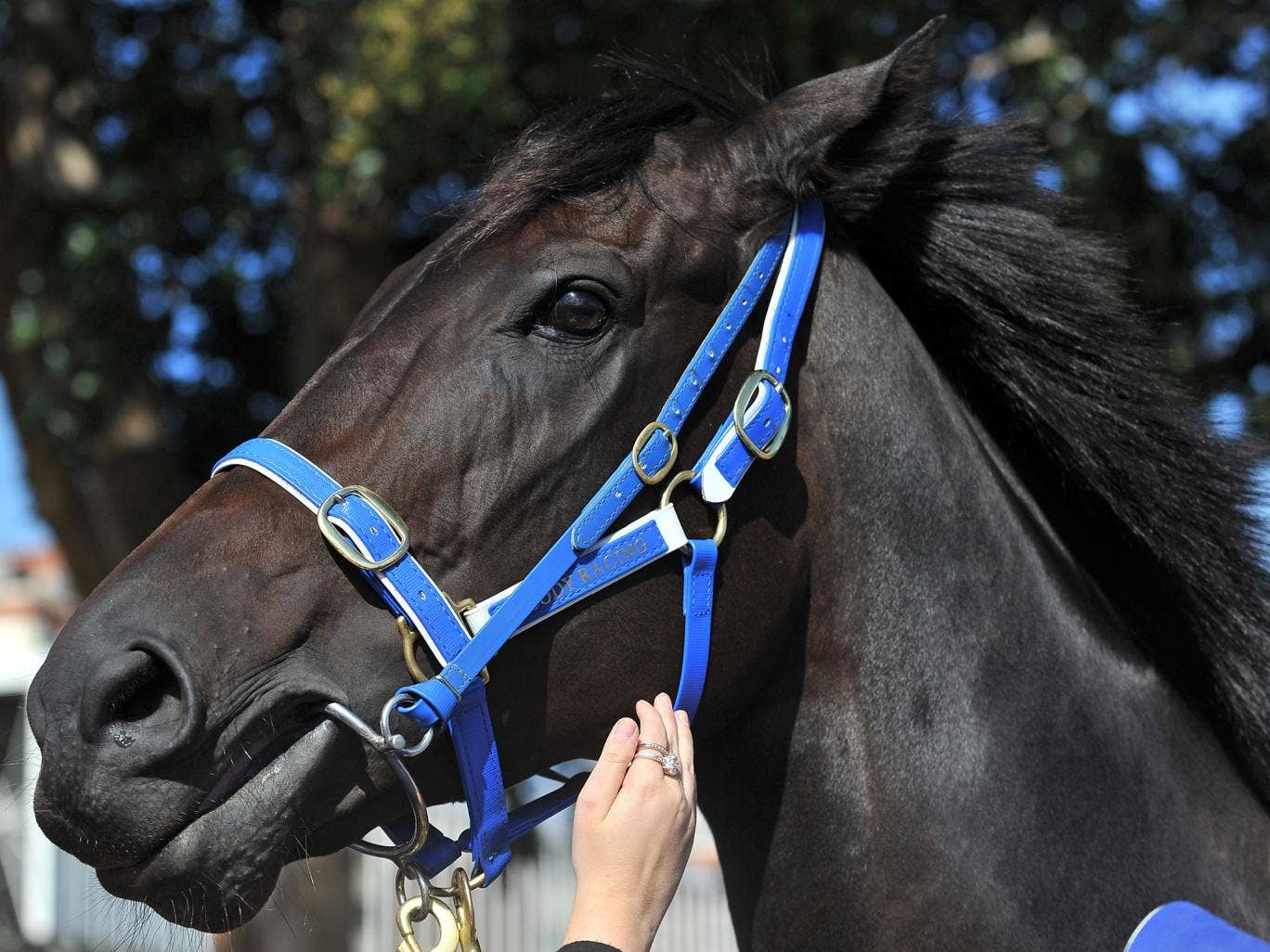 Jimmy's half-brother Black Caviar was retired earlier this year after a stellar career