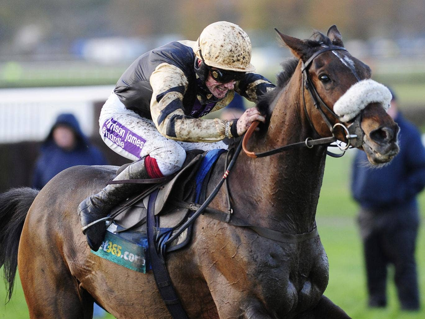 Paul Nicholl's 12-year-old Tidal Bay can add the Betfair Chase to his winning tally