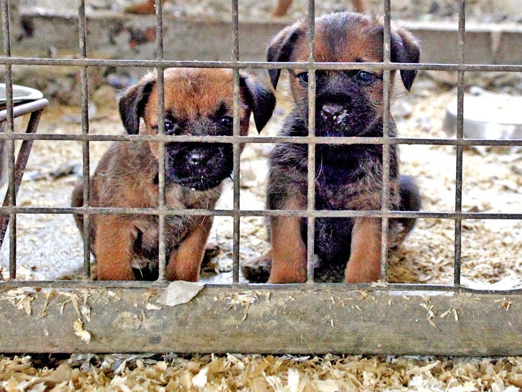 The RSPCA receives more than 1,500 complaints about puppy farms each year