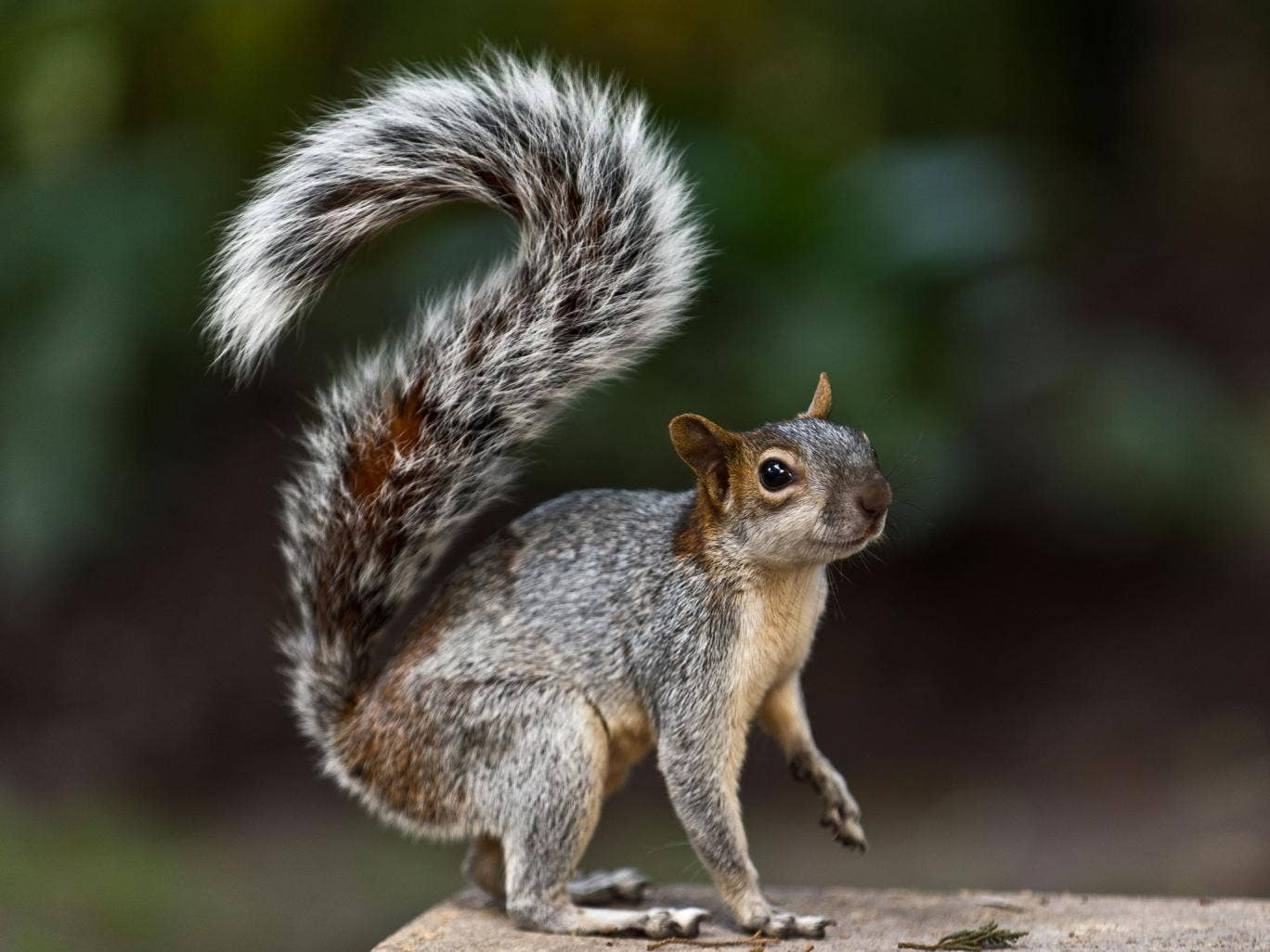 Scunthorpe United have asked fans not to dress up as squirrel's ahead of former manager Alan Knill's return to the club