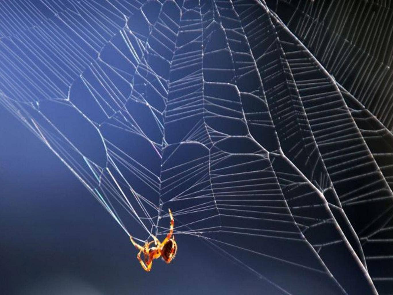 Spiders' webs are covered with an electrically conductive glue, and they filter pollutants as well as catch insects