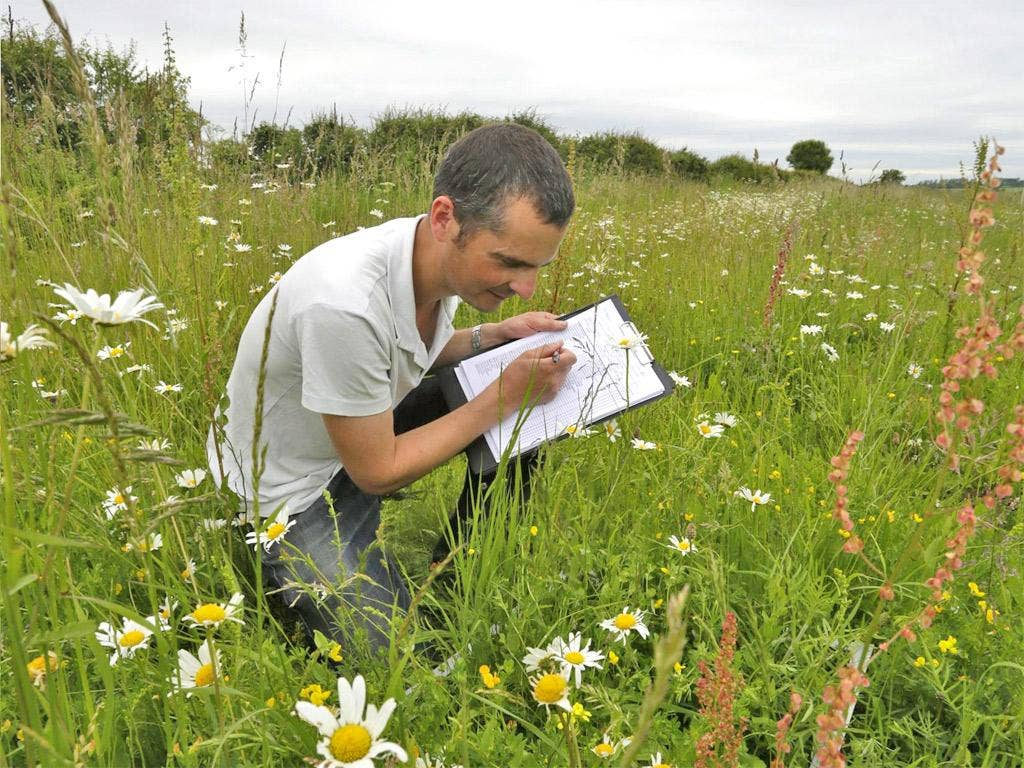 Seeing how the land lies: a survey of field margins at Hope Farm