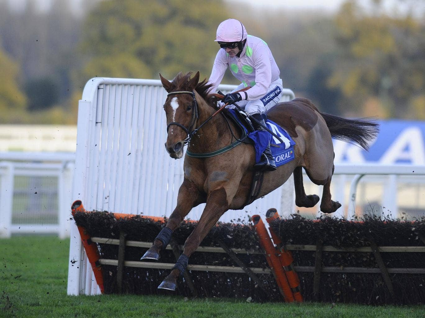 Irish trainer Willie Mullins must choose between several Festival targets for Annie Power, pictured