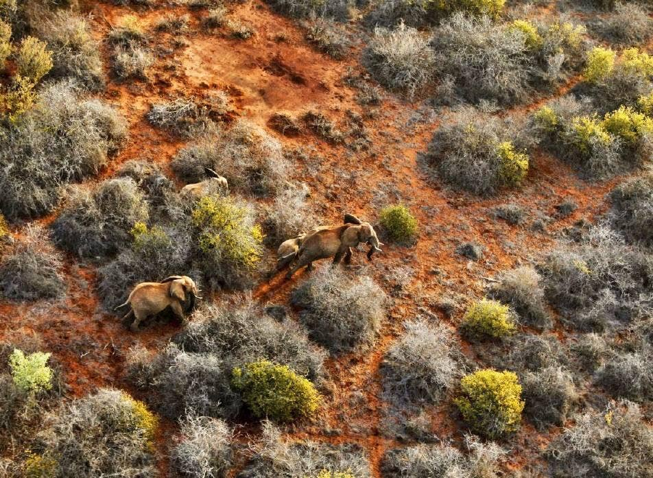 An aerial view shows a family of elephants grazing in Tsavo East National Park, Coast Province, Kenya
