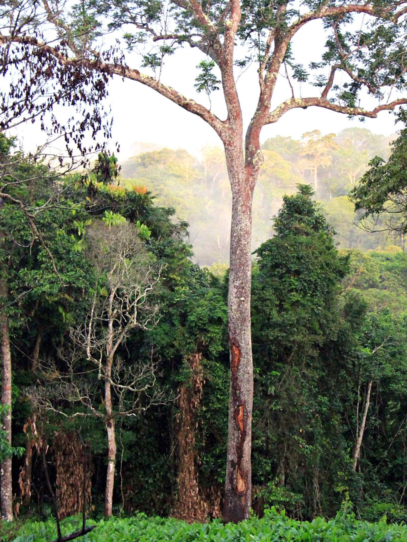 Monkeying around: rainforest in the Congo