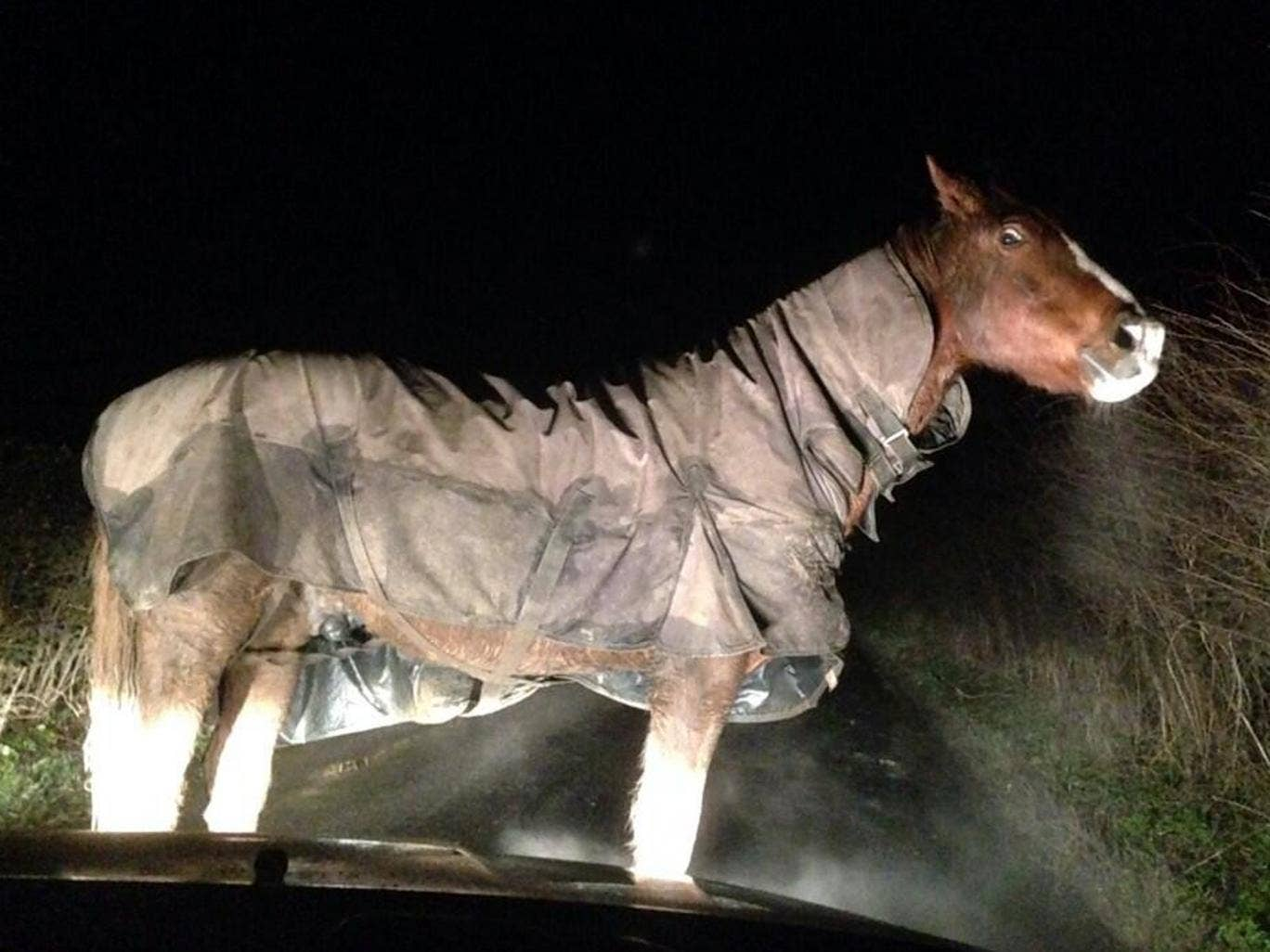 FreeNelly: Police are trying to track down the owner of a horse discovered early Friday morning