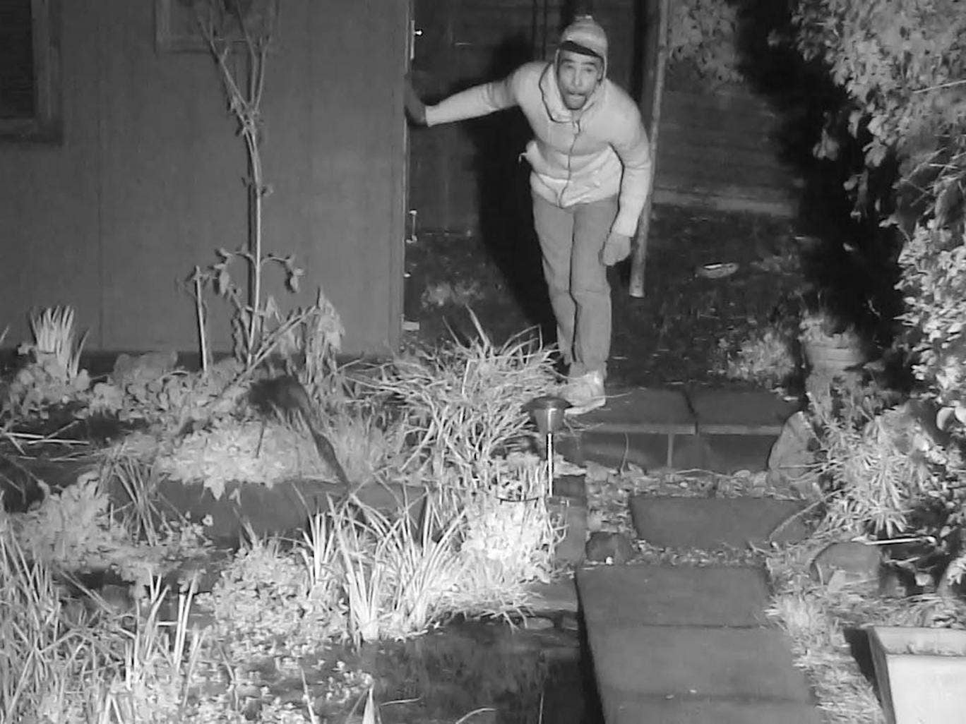 Police released this image, captured by Simon King's 'Fox Family Cam', and said they would like to speak to man in connection with a burglary investigation