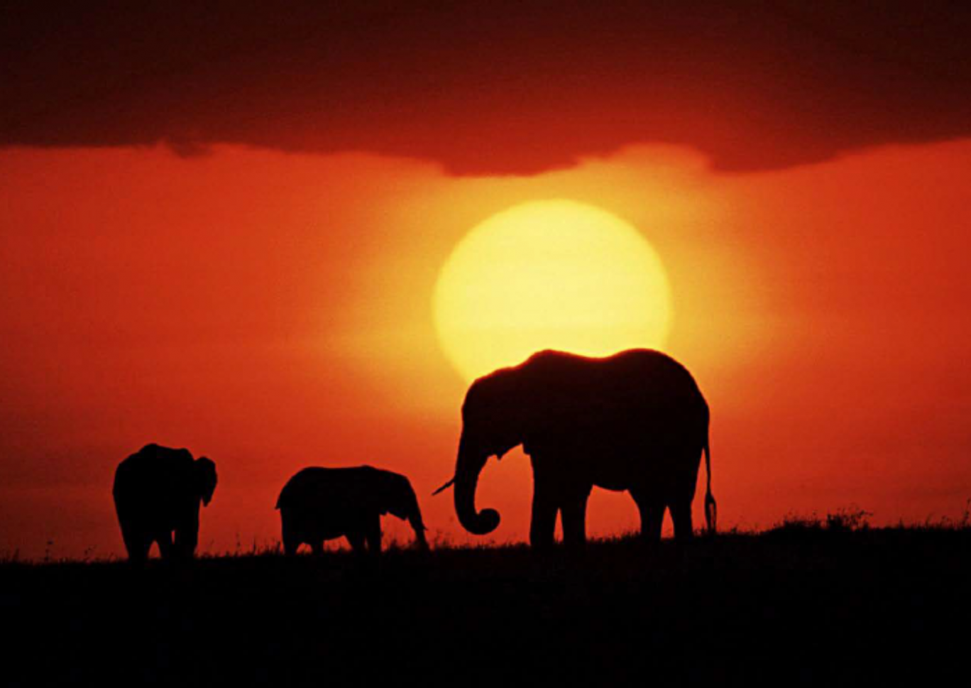 Elephants at sunrise