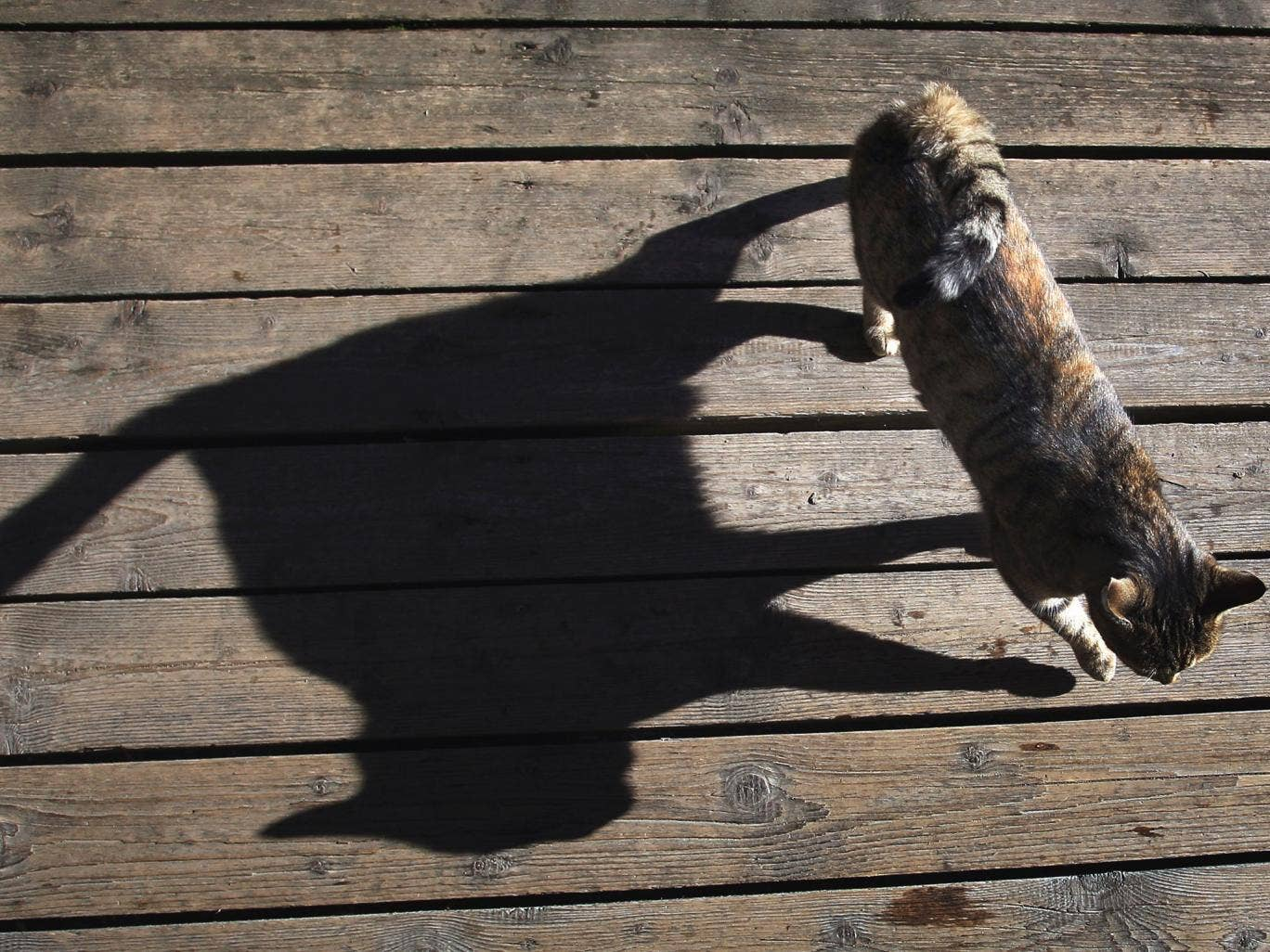 A cat casts a long shadow as it walks over the terrace of an outdoor cafe near Seeg, southern Germany, on November 12, 2013.