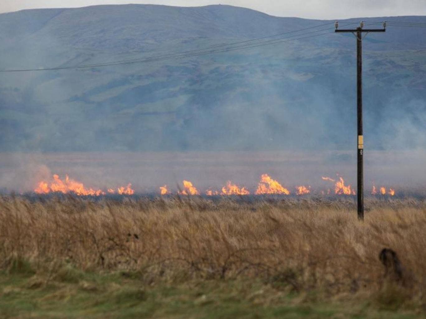 The seaside village of Borth on the edge of Cardigan Bay, already battered by the recent violent storms, faces another threat as Cors Fochno - Borth Bog catches fire and flames, driven by the high wind, draw nearer to homes
