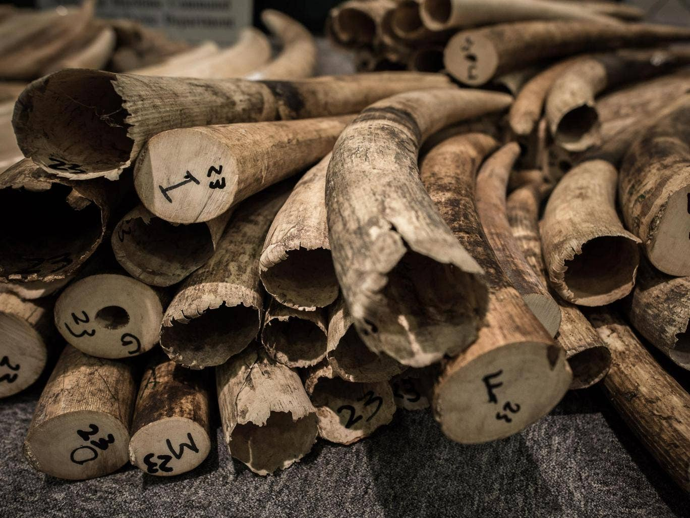 The Royal Family has been urged to get rid of objects made from ivory