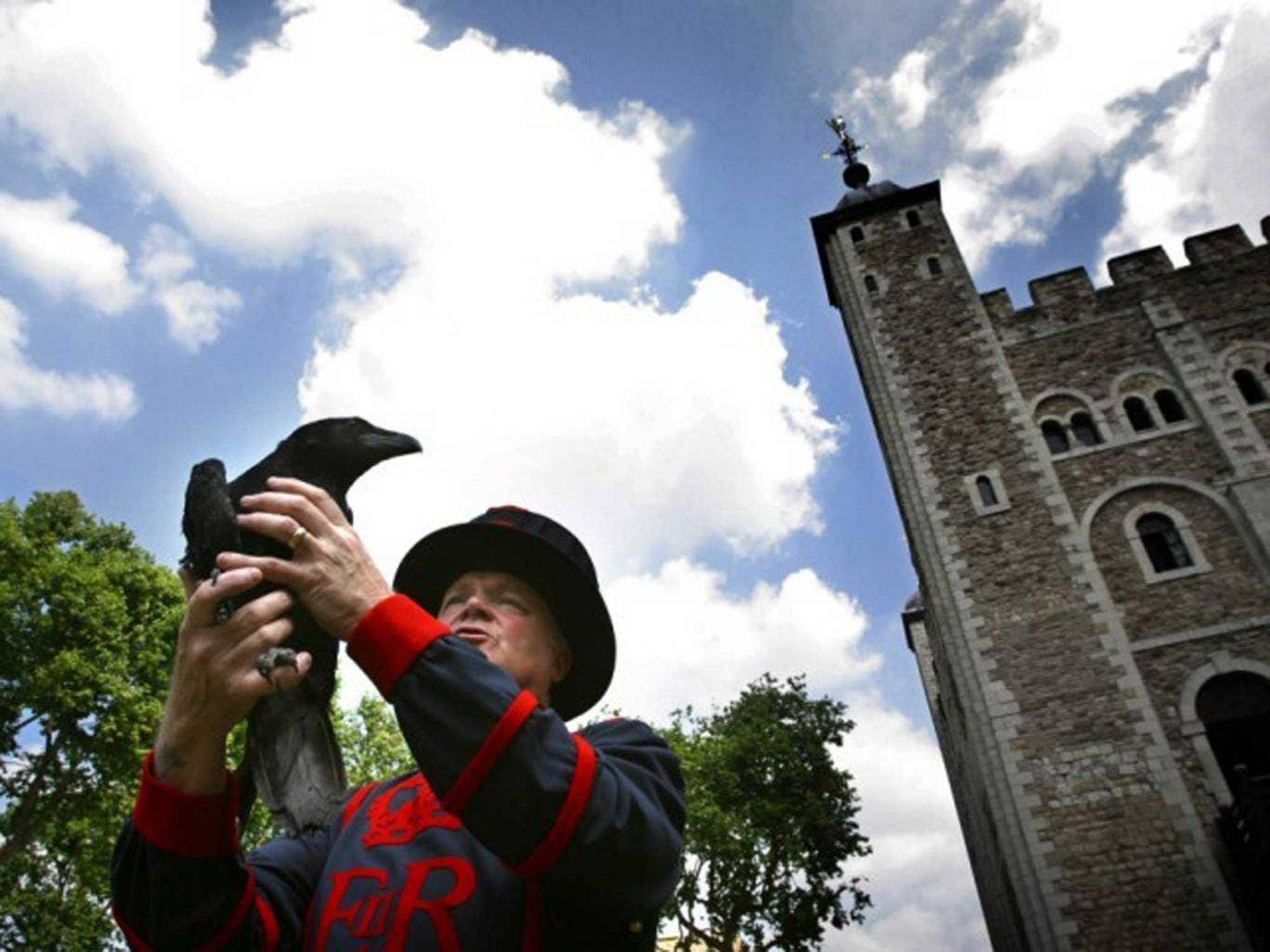 Watch the birdie: Ravens have been kept at the Tower for centuries