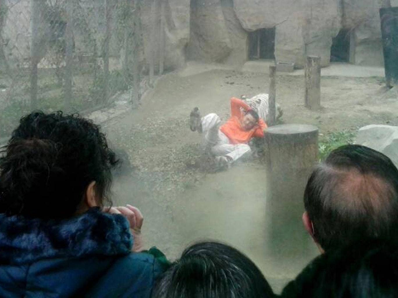 Yang Jinhai, 27, told reporters he jumped into an enclosure at Chengdu Zoo, Sichuan, because he wanted to 'feed the tigers'