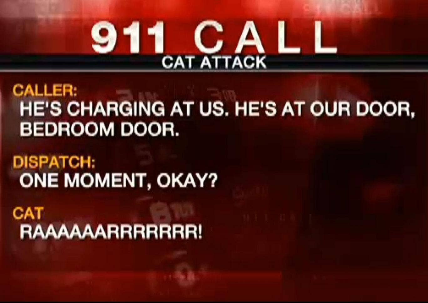 The 911 call - quoting the cat.