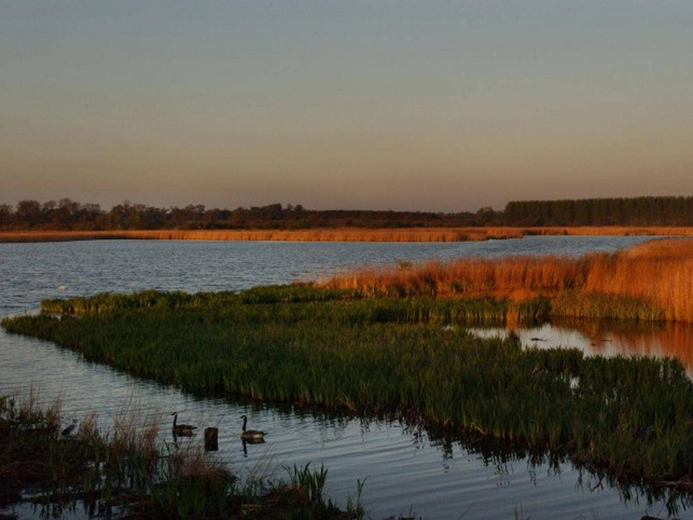 Ripple effect: Minsmere nature reserve