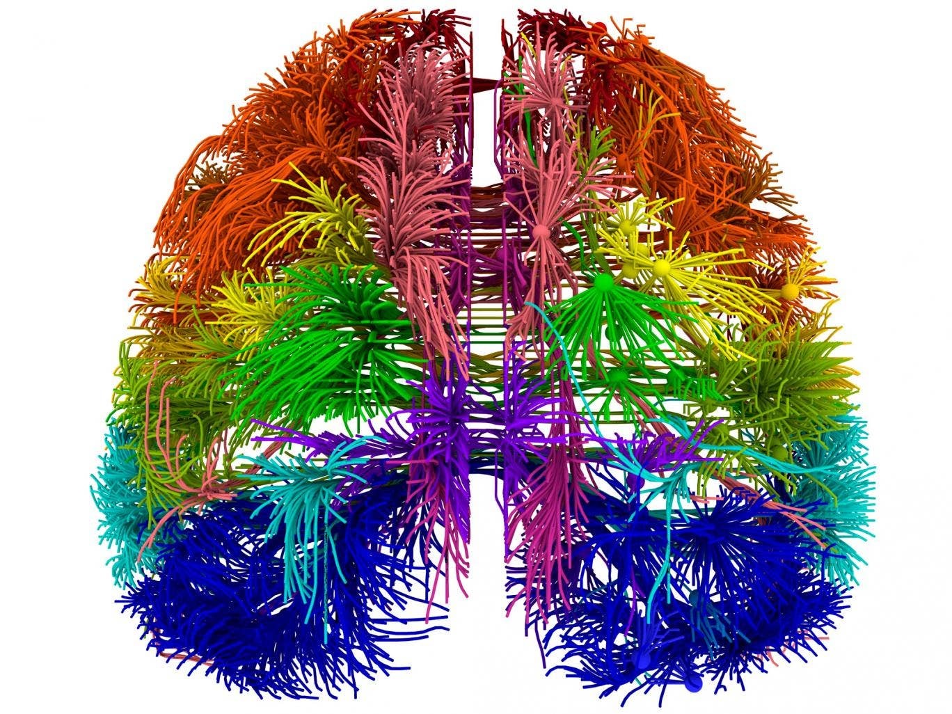 A top-down view of the connections between several distinct cortical areas, visualized using Allen Institute software