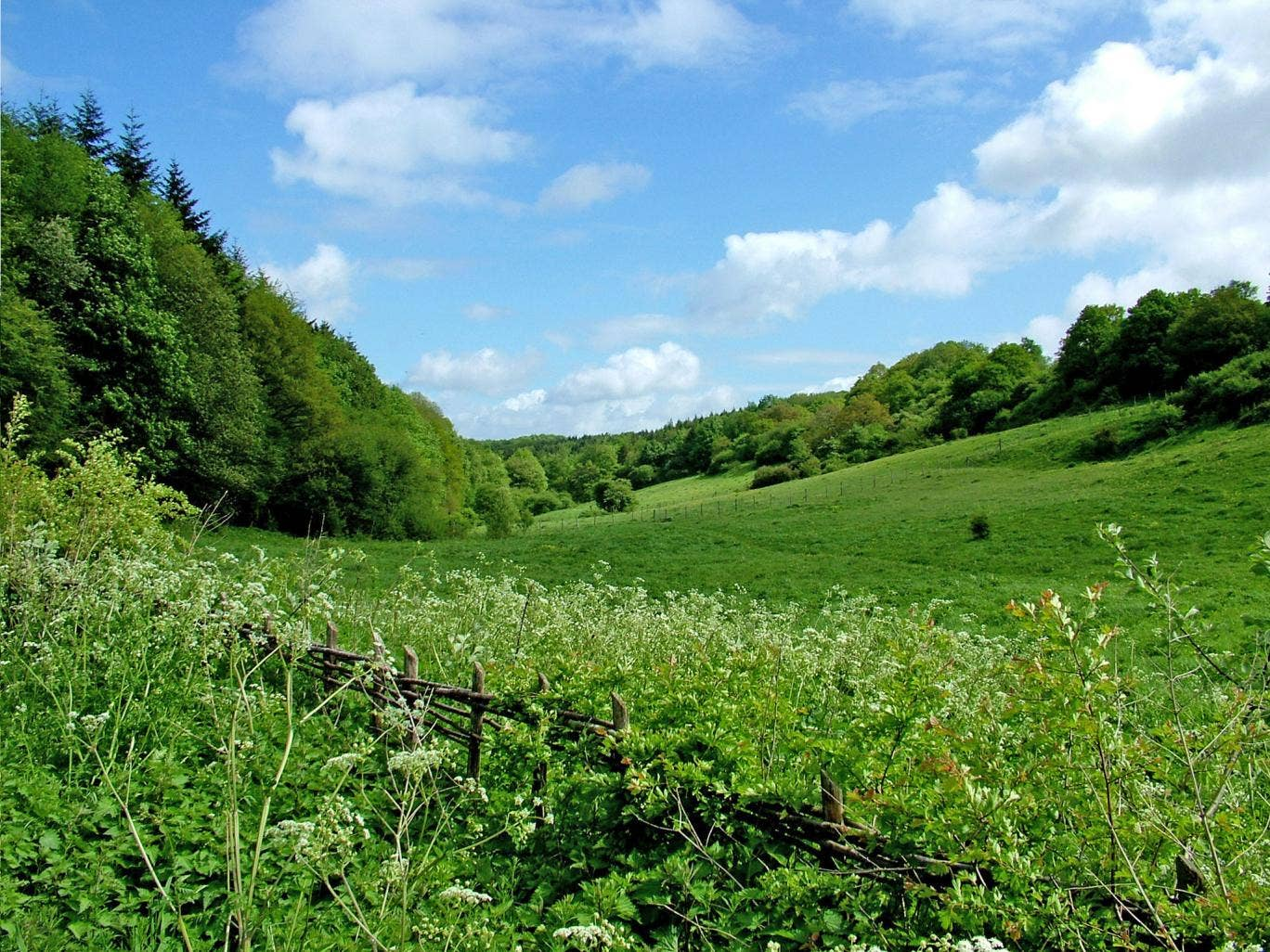 Park Gate Down in Kent. The Wildlife Trusts believe England's wildlife-rich grasslands are suffering a 'catastrophic decline'