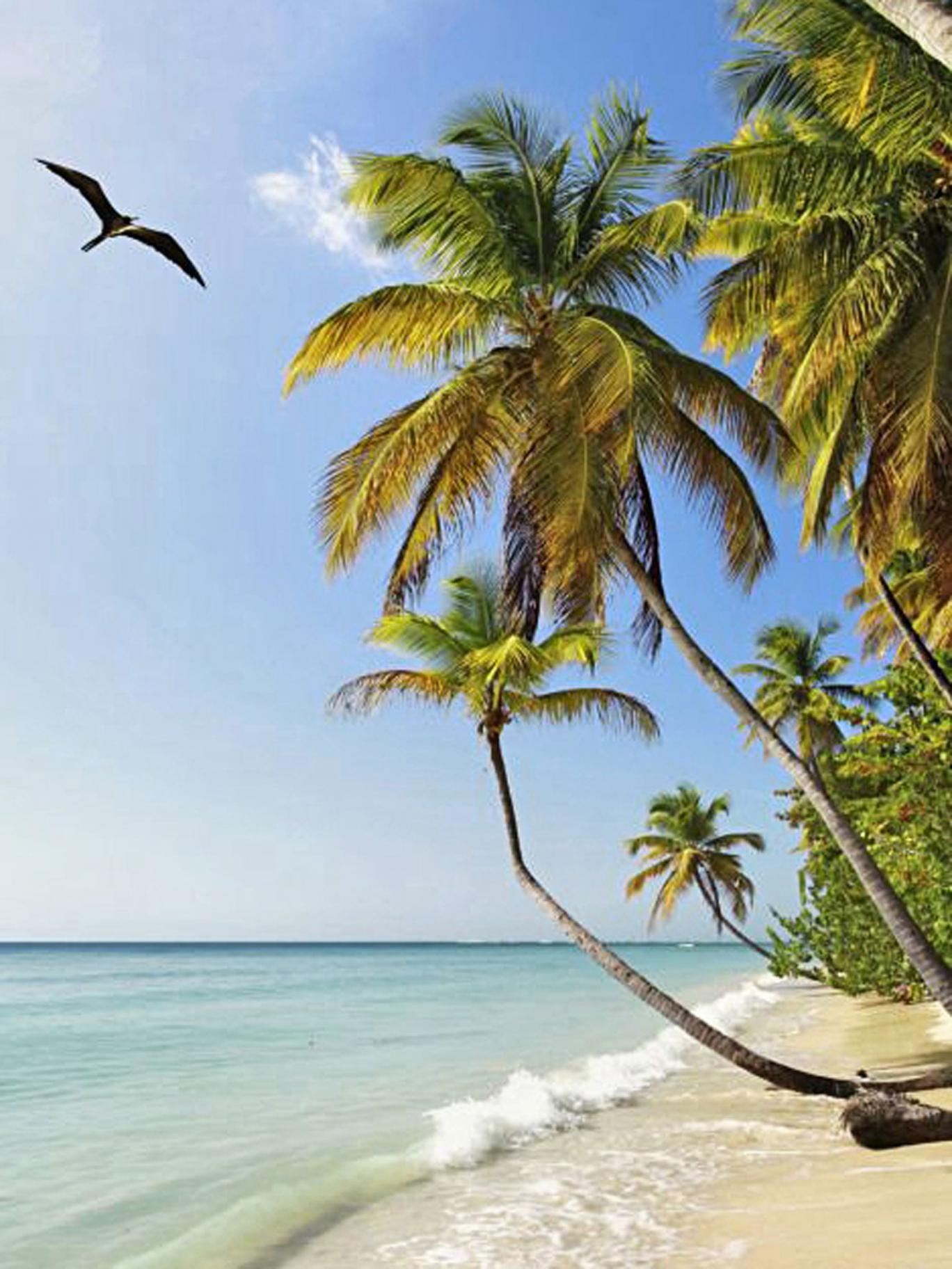 Winter wonderland: spending Christmas in Tobago felt radical for Malone