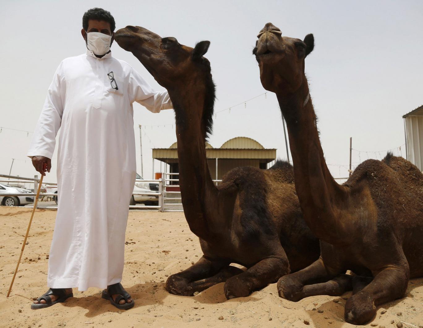 A man wearing a mask at a camel market in the village of al-Thamama near Riyadh on 11 May, 2014