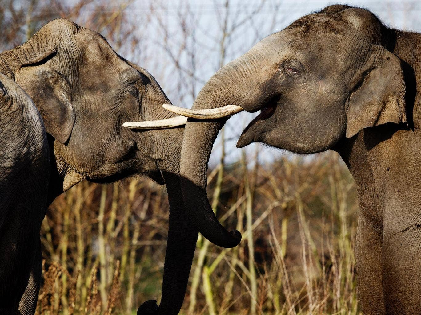 The Independent's 2013 Elephant Appeal raised more than £500,000 to combat the poaching crisis