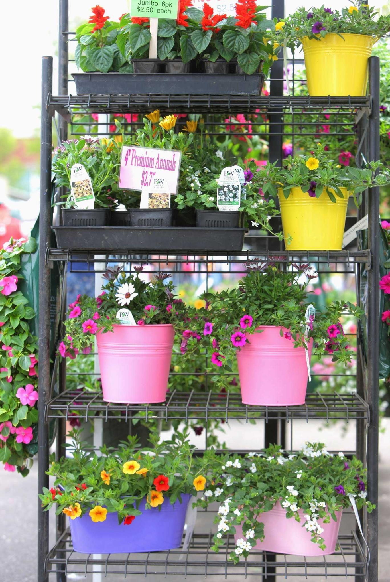Pots of money: garden-centre goodies to tempt you towards your next impulse purchase