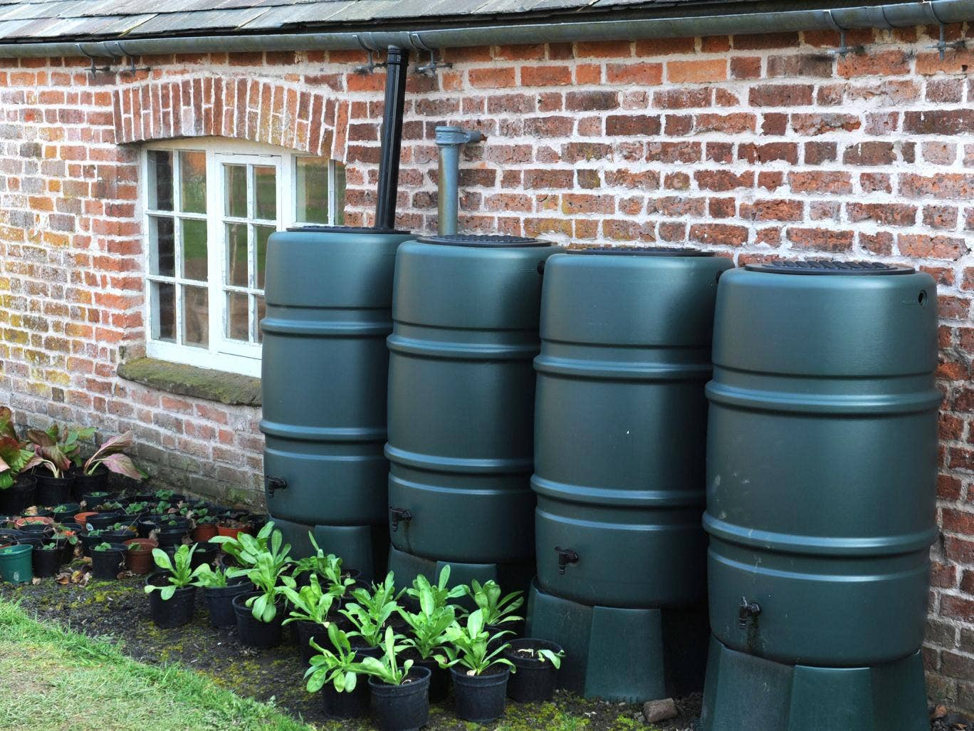 The sheer number of water butts spread across the UK creates a network of easily accessible prime mosquito larvae habitat