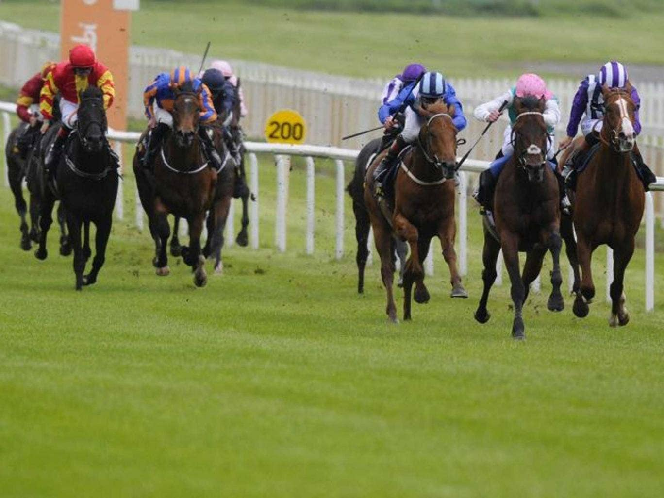 Regal romp: Kingman and James Doyle (second right) cruise towards a five-length victory at the Curragh