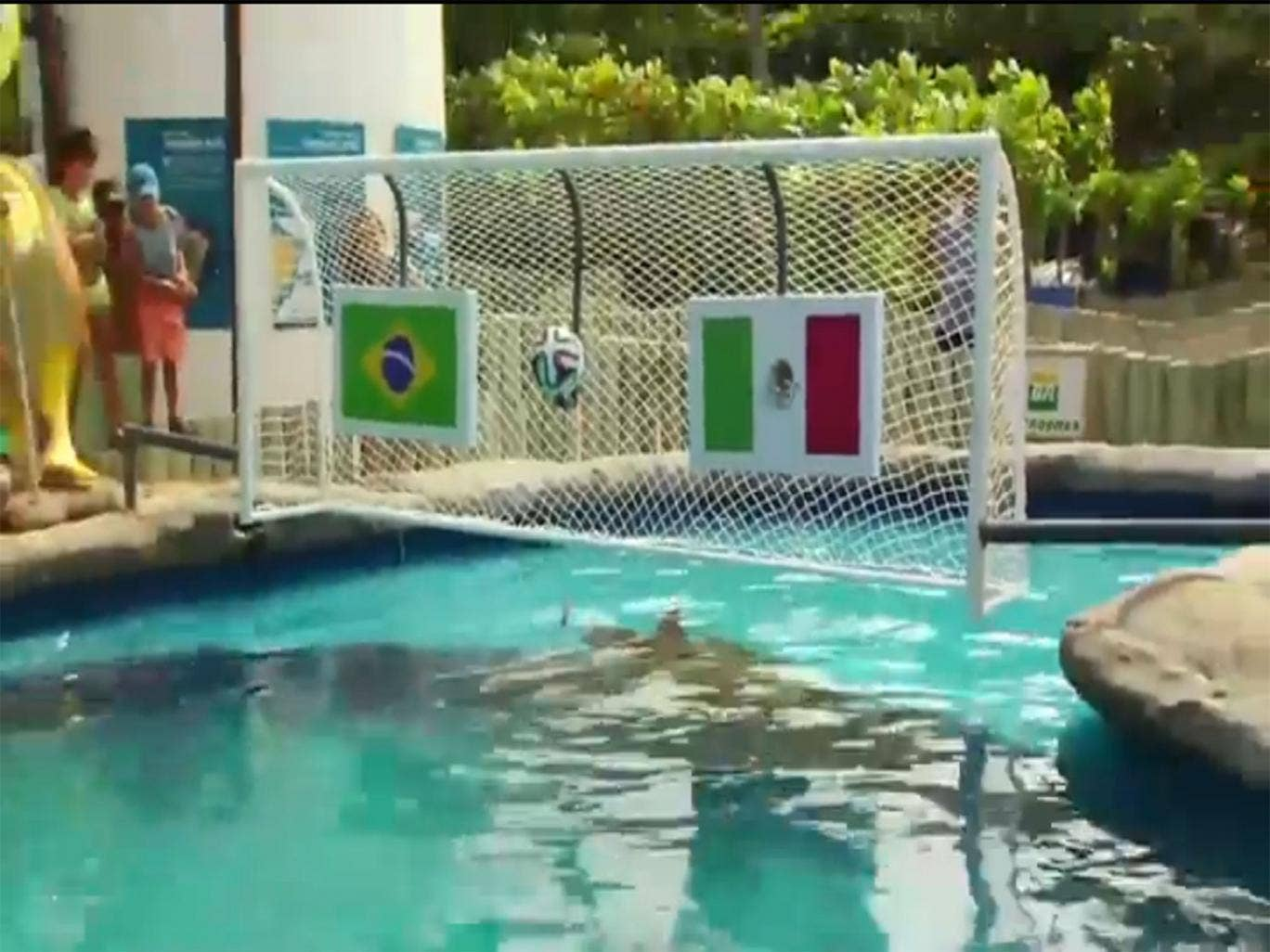 Cabeção, the 'psychic' turtle, predicts Mexico to beat Brazil in the 2014 World Cup