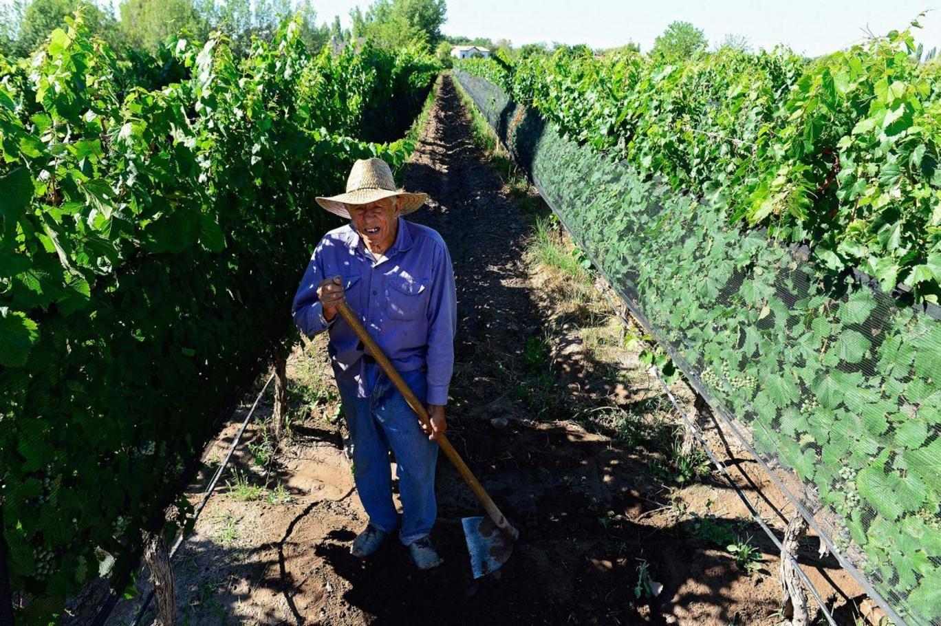 A man tends a vineyard in Mendoza, Argentina