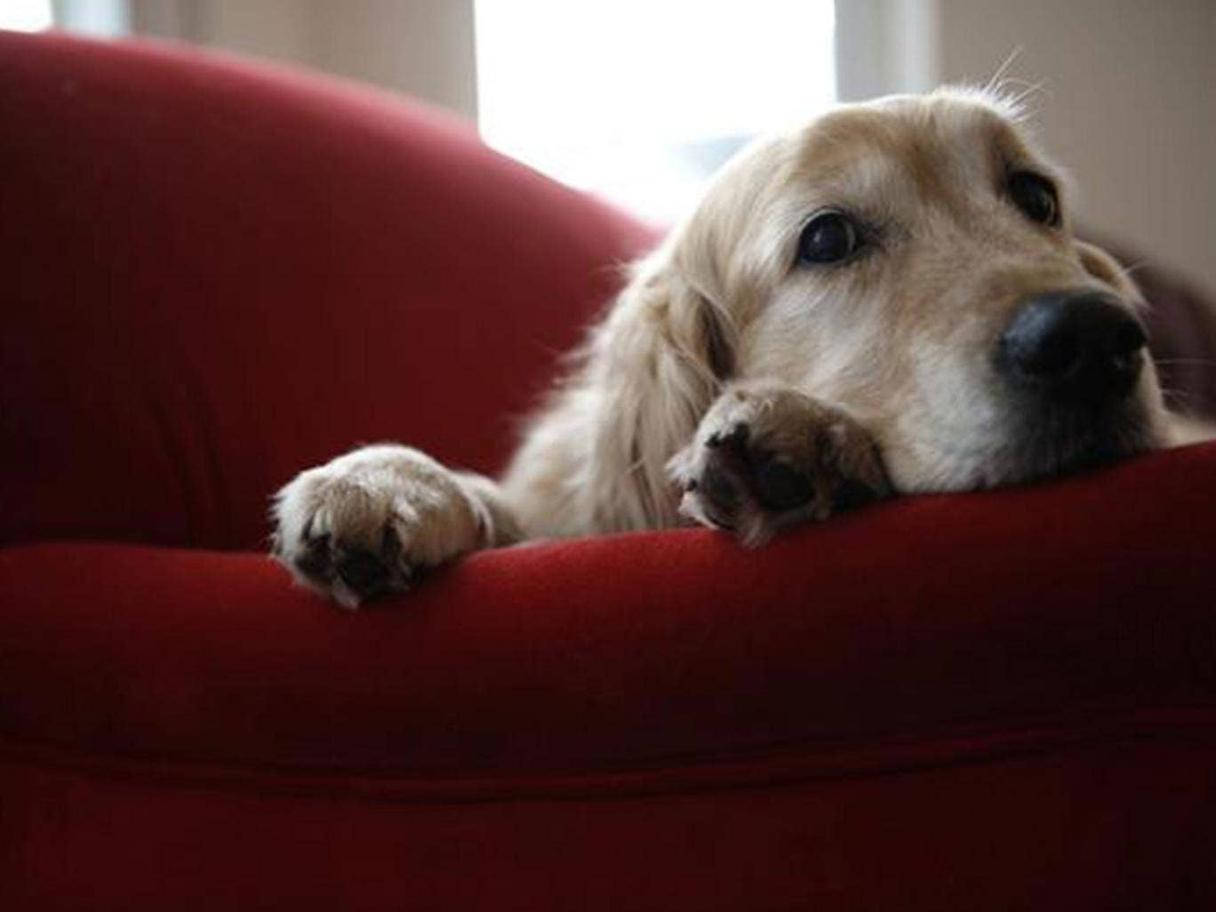 The Northumbria University School of Law has called for a revolution in how divorce-custody decisions are made for pets