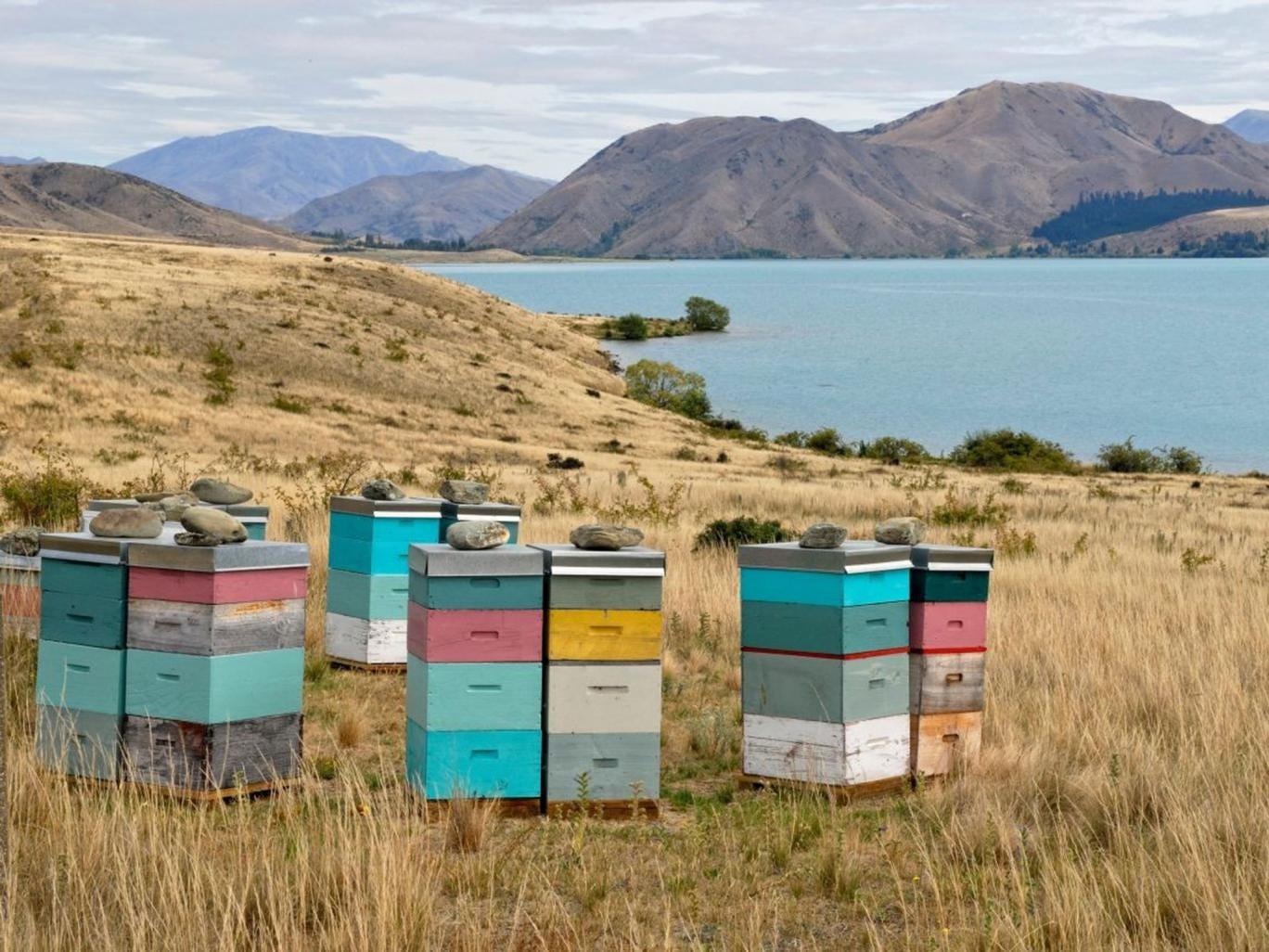Sweet sensation: New Zealand beehives