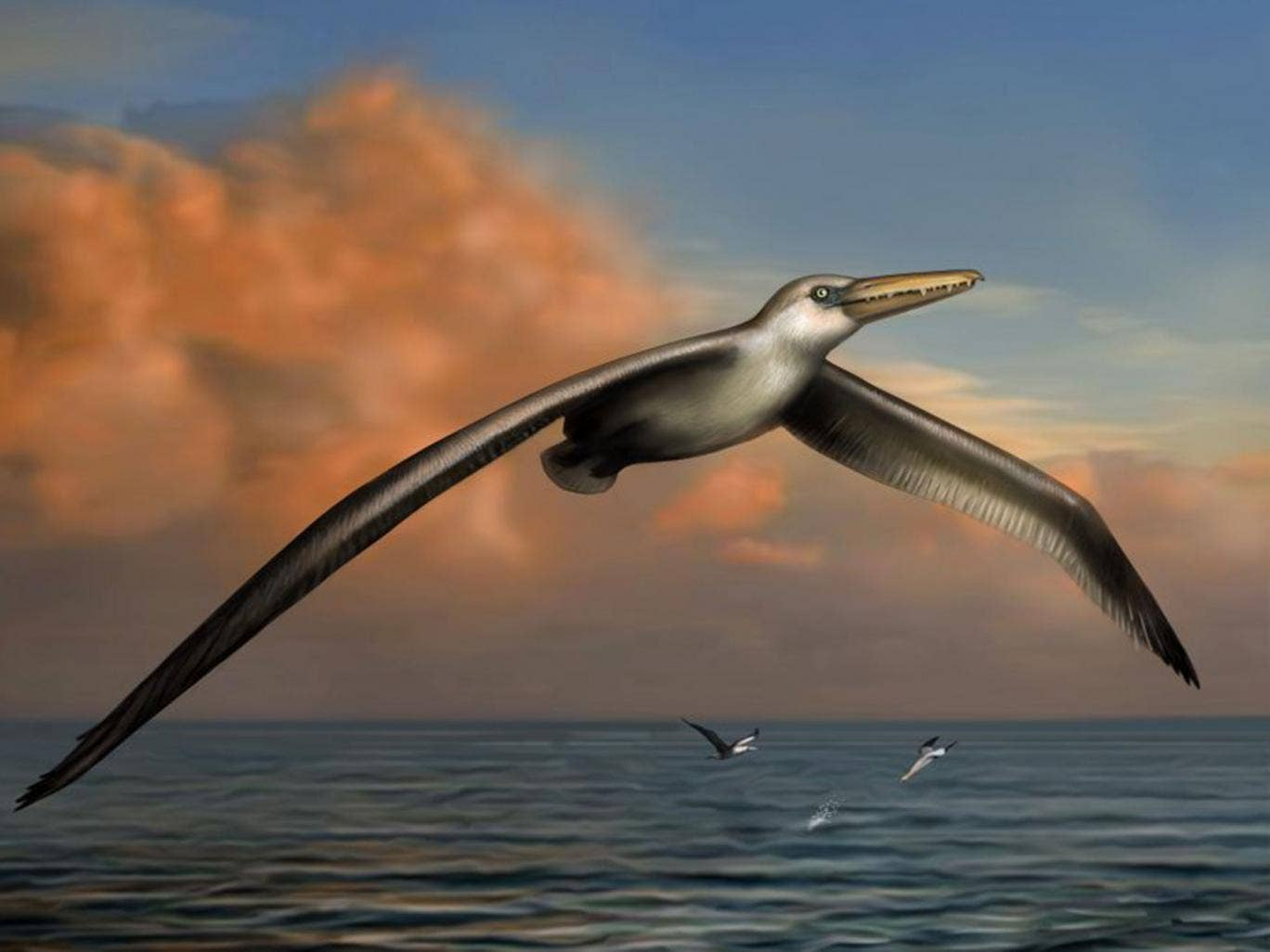 An artist's impression  of Pelagornis sandersi, which could fly great distances
